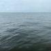 海洋散骨体験をしてきた